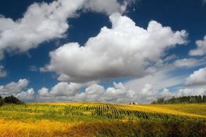 /Os campos da minha terra