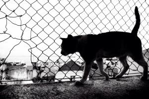 Animais/Procurando a passagem
