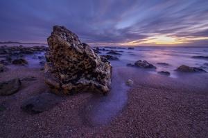 Paisagem Natural/O sapo da praia