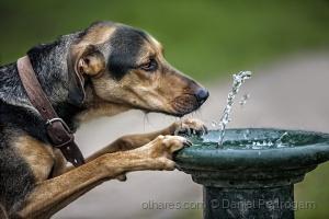 Animais/a sede