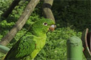 Animais/Papagaios...curiosidades (ler)