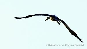 Animais/Cegonha Voando