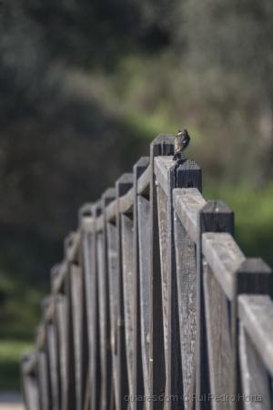 /Little bird