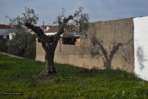 /A Oliveira e Sombra