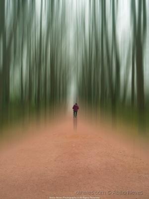 """Outros/""""O caminho da floresta"""""""