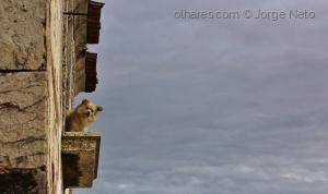 /O Cão Curioso