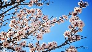 Paisagem Natural/em flor