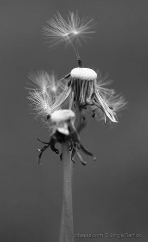 Macro/E tudo o vento levou