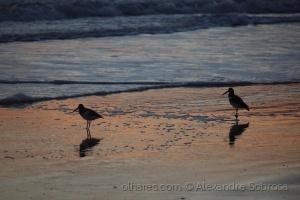 Paisagem Natural/Beach