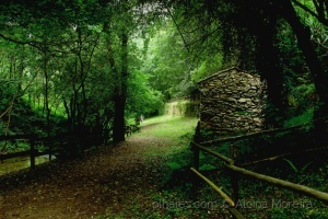 /A casinha da floresta