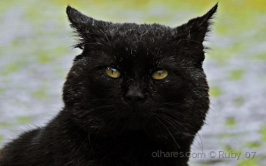 Animais/OLD CAT