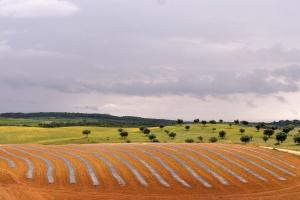Paisagem Natural/Campos da minha terra #2