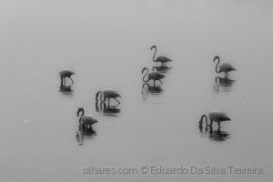 Animais/Cada um para seu lado