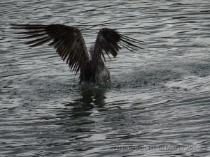 Animais/A gaivota foi ao banho...