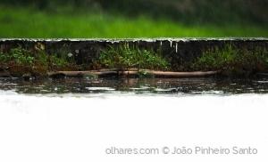 Outros/Dias de Chuva