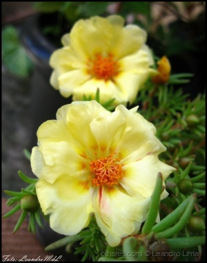 /Flores do meu jardim XII