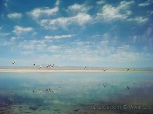 Paisagem Natural/Laguna Chaxa