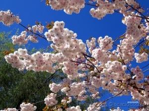 Paisagem Natural/O sorriso da primavera!
