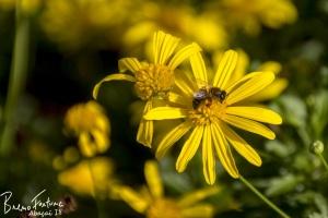 Paisagem Natural/Já é Primavera!