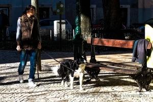 /Cão & companhia  (Reedição )