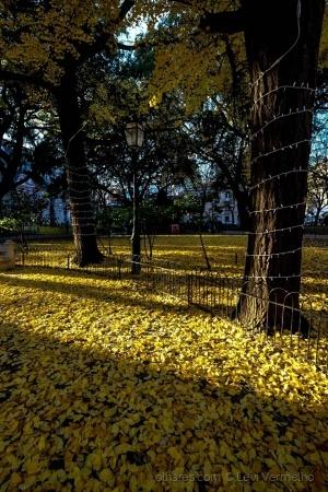 /Nostalgia do outono...