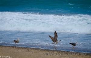 Outros/Vento forte e gaivotas na Galé