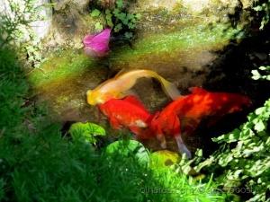 Macro/lago colorido de água doce