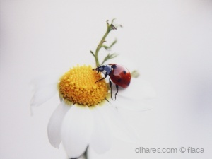 Paisagem Natural/lady bug