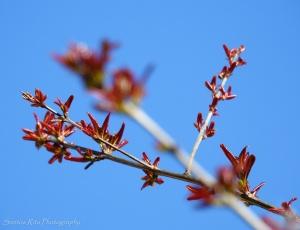 /Sinais de Primavera