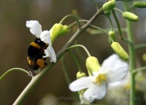 /Vida de uma abelha