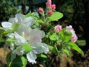 Paisagem Natural/Spring blossoms... (ler)