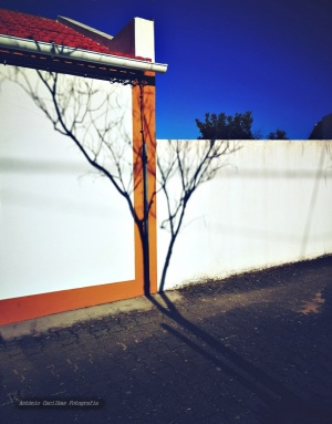 Abstrato/Nunca tema as sombras