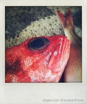 Outros/Olho de peixe