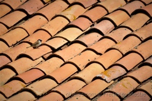 Animais/Pardal no telhado