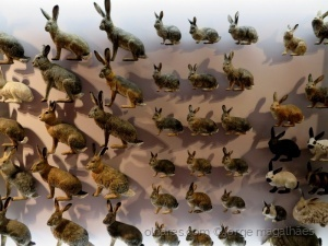 /Hoje há coelho, de Páscoa