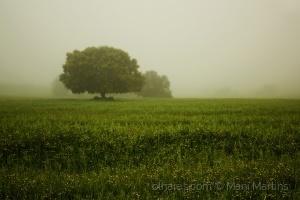 /Alentejo, terra onde nasce a semente