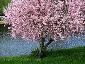 /Água, Àrvore....Vida!,