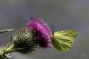 /Fauna e Flora