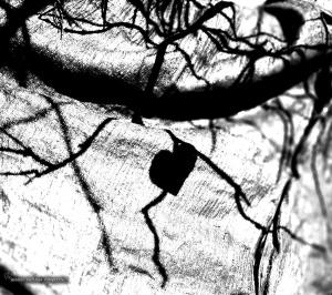 Abstrato/A Sombra de um Coração