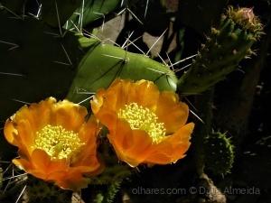 Macro/flor com espinhos