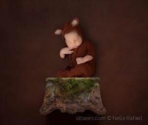 Arte Digital/Little fox