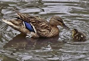 /Os patos também beijam!! ( Temático )