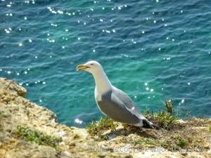 /Uma linda gaivota