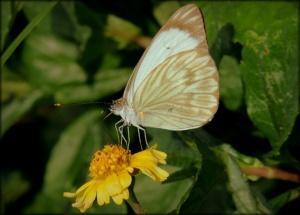 /Natureza: Belezas, cores e detalhes 29/36