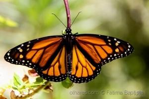 /Fauna e Flora III
