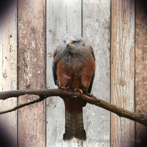 /Bird