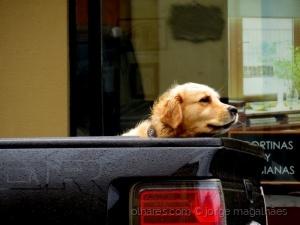 /Cão de guarda...ao carro