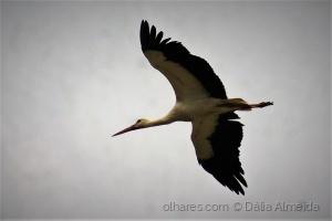 Animais/o voo da cegonha