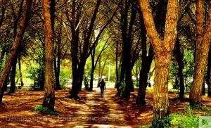 /Árvores que te abraçam