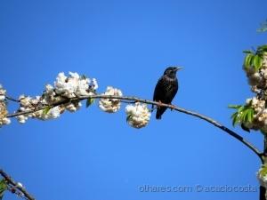 /Liberdade de cantar abril na primavera!